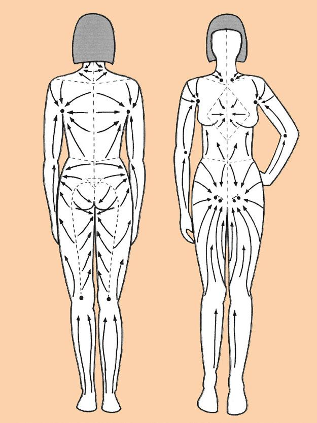 Схема направления лимфодренажных линий при выполнении антицеллюлитного массажа