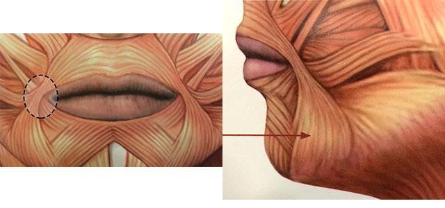 Как поднять опущенные уголки губ: гимнастика, массаж, инъекции и пластика