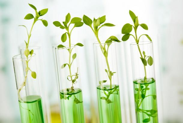 Применение стволовых клеток человека и растений в косметологии и косметике