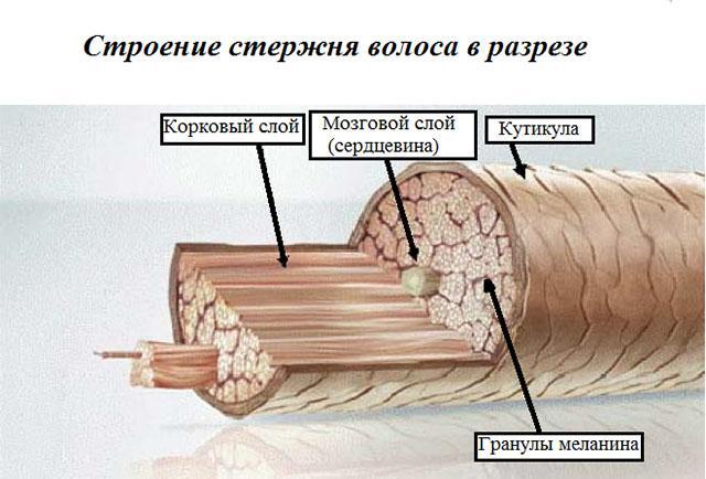 От чего секутся кончики волос