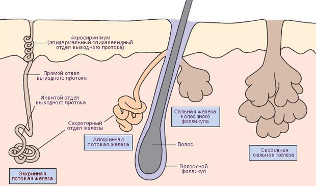 Гипергидроз подмышек. Сильно потеют подмышки — что делать? Лечение гипергидроза подмышек лазером, ботоксом, содой. Прокладки для подмышек от пота