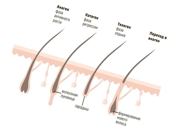 Рост волосков на теле